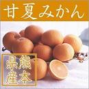 甘夏 みかん 柑橘 田の浦 熊本
