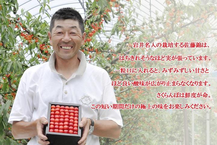 さくらんぼ 佐藤錦