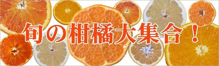 柑橘 せとか ブラッドオレンジ トップオレンジ 熊本 愛媛