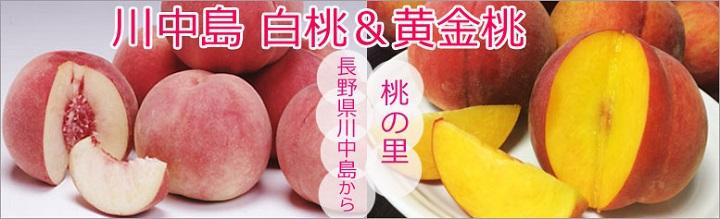 川中島白桃 黄金桃