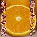 愛媛熊本 清見オレンジ