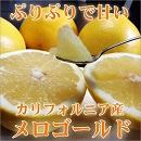 メロゴールド 柑橘 カリフォルニア
