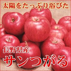 りんご サンつがる 長野 信州