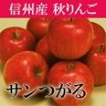りんご サンつがる 信州 長野