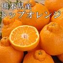 みかん トップオレンジ