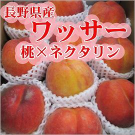 長野県産 ワッサー